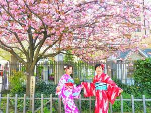 インドネシアからのお客さまです。桜のしたで、記念写真!お着物がとてもお似合いです(~▽~@)♪♪♪浅草散策楽しんでくださいね(σ≧▽≦)σ