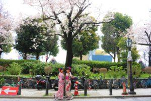 綺麗な着物と桜ですね