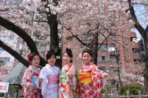 着物 女子会 桜
