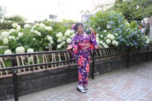 お着物とあじさいです。 漂亮和服配上盛開的繡球花。