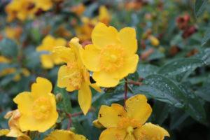 隅田公園 お花の写真